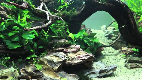 Aquascaping Stones by 90x45x45 Planted Aquascape