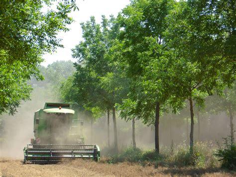chambre d agriculture montpellier dispositif agroforesterie tempérée rap dispositifs de
