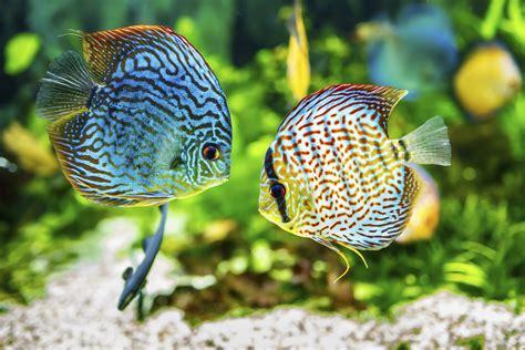 treat fungus  aquarium fish ehow