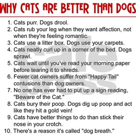 dogs cats better than vs essay pets funny cat why mousepad