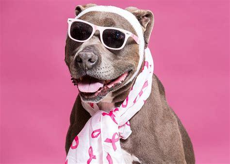 adopt  pet dogs  puppies nevada humane society