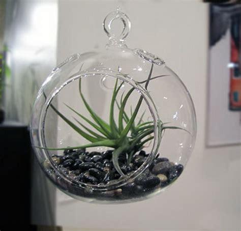 unusual air plants home decoration inspiration ideas