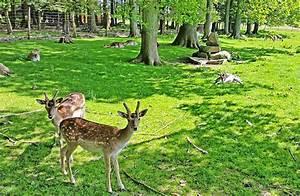 Tierpark Bad Mergentheim : stadt wiehl wildpark ~ Watch28wear.com Haus und Dekorationen