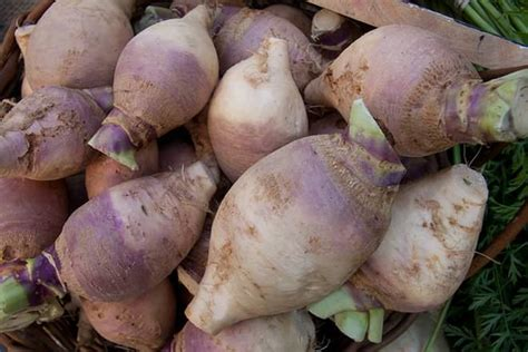 rutabaga vs turnip rutabaga vs turnip difference and comparison diffen