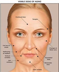 Facial Mapping Anatomy Of The Face Skin