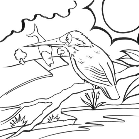Coloring Picture For Kid by And Printable Kingfisher Colouring Pages For