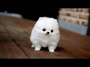 Cute Small Dogs|The Top Smallest Dog Breeds in the World ...