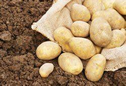 sind kartoffeln gesund sind kartoffeln gesund 4 wichtige fakten