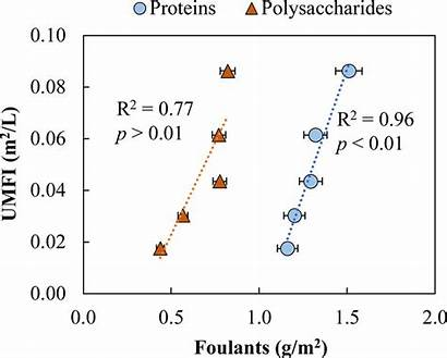 Irreversible Polysaccharide Concentrations Umfi Protein Function