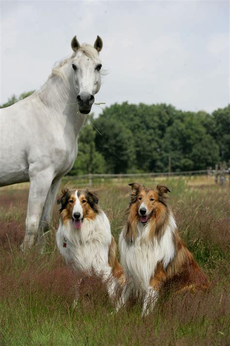 mensch trifft hund trifft pferd ab freitag  dortmund
