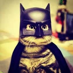 batman cat lol cats picture