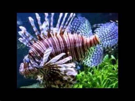 les 10 plus beau poissons au monde