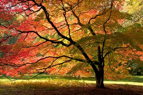 landscaping trees pictures peregrine tree landscape sandpoint tree service