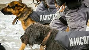 The Surprising Truth About Sniffer Dogs | Big Think