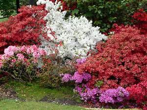 Plante Pour Jardin Japonais : un lumineux jardin d 39 ombre ~ Dode.kayakingforconservation.com Idées de Décoration