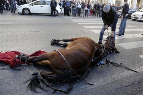 carrozze per cavalli usate cavalli trainano carrozze la sofferenza non