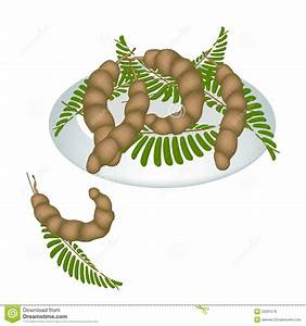 A Plate Of Fresh Tamarind Pod And Leaves Royalty Free ...