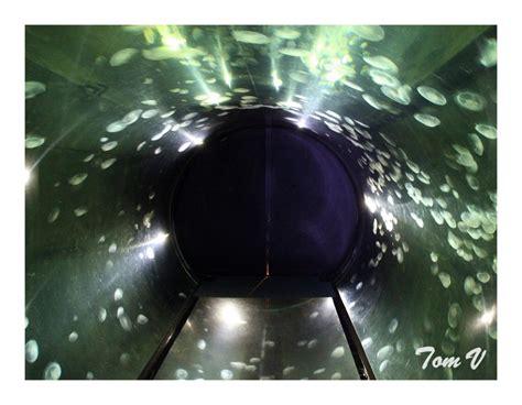 aquario philrecifal visite aquarium de la rochelle