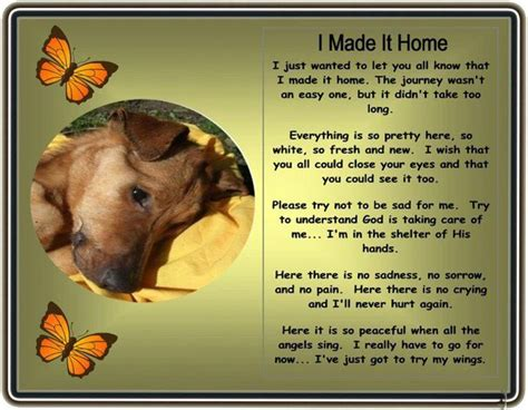 words of comfort for loss of pet 1000 images about pet loss words photo39s of comfort