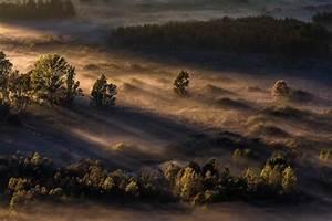 Nature, Landscape, Mist, Sunrise, Forest, Sunlight, Trees, Morning, Wallpapers, Hd, Desktop, And