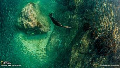 Geographic National Diving Mexico Bird 10wallpaper Resolution