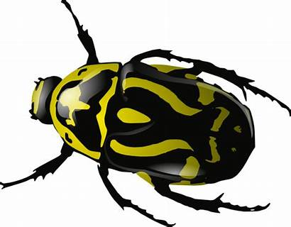 Clipart Insect Clipartix