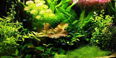 Plants For Aquascaping by Understanding Aquascaping Style The Aquarium Guide