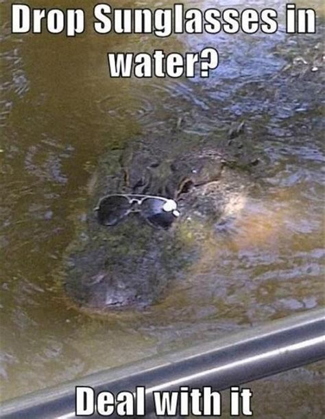 Alligator Meme - alligator sunglasses funny pictures dump a day
