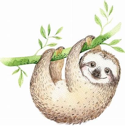Sloth Cartoon Transparent Kristina Dont Give Kvilis