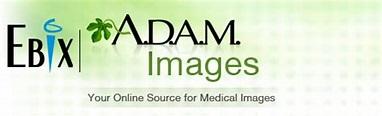 A.D.A.M. Images