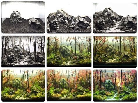 Diy Aquascape by 18 Best Images About Aquascape Diy On Grow Out