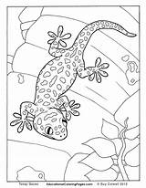 Coloring Gecko Animal Creepers Colouring Geckos Lizard Realistic Adult Crawly Reptiles Goanna Animals Tokay Drawing Sheets Amphibians Patterns Sheet Line sketch template
