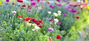 Hortensien Kombinieren Mit Anderen Pflanzen : 5 perfekte pflanzenpaare f r deinen garten so sch n passen sie zusammen willkommen in franks ~ Eleganceandgraceweddings.com Haus und Dekorationen