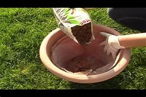 Blumenkübel Bepflanzen Vorschläge : video blumenk bel richtig bepflanzen ~ Frokenaadalensverden.com Haus und Dekorationen