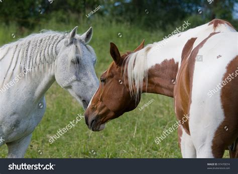 nice horses two shutterstock