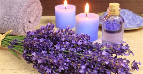 Bilder Mit Lavendel by Lavender Picture Weneedfun