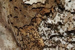 Ameisen Im Haus Woher : ameisen carla kemmerling sch dlingsbek mpfung ~ Lizthompson.info Haus und Dekorationen