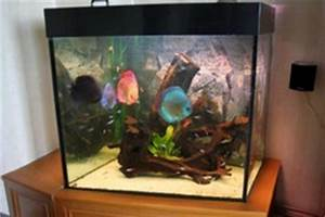 Aquarium Gestaltung Bilder : diskusfische aquarium diskus aquarium bilder privates ~ Lizthompson.info Haus und Dekorationen