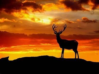 Deer Nature Animals Wallpapers Animal Desktop Stags