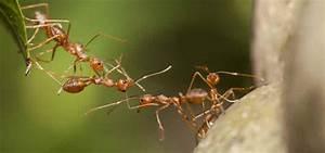 Ameisen Bekämpfen Im Garten : ameisen im garten ameisen bek mpfen das gartenmagazin ~ Frokenaadalensverden.com Haus und Dekorationen