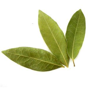 bay leaf replacement bay leaf substitutes ingredients equivalents gourmetsleuth