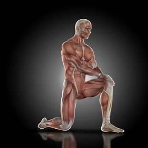 Image Homme Musclé : oblique vecteurs et photos gratuites ~ Medecine-chirurgie-esthetiques.com Avis de Voitures