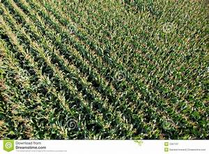 Aerial View Of Farmers Field. Royalty Free Stock ...
