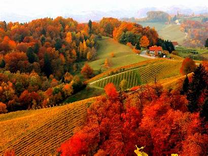 Fall Foliage Backgrounds Wallpapers Pixelstalk