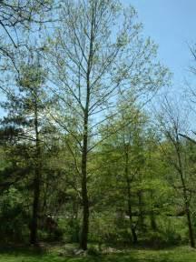 asheville moon tree