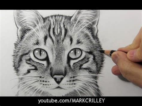 draw  cat narrated step  step tutorial