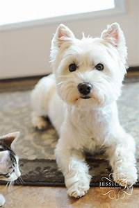 Best 20+ Dog haircuts ideas on Pinterest