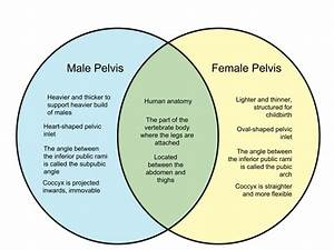 Difference Between Male And Female Pelvis
