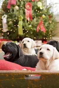 Christmas pups | Puppy Love | Pinterest