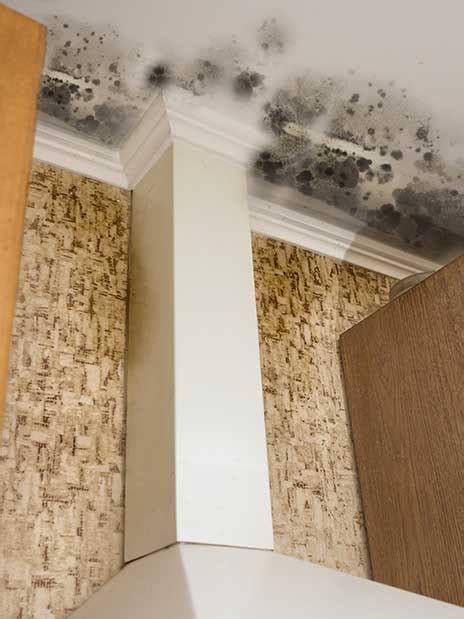 black mould removal  testing ph group restorations